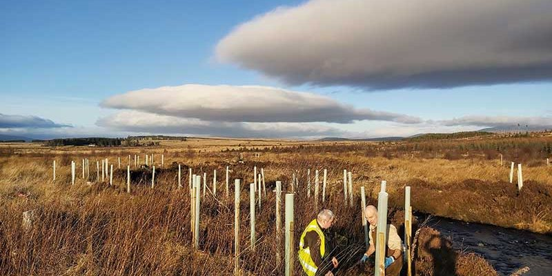 5000 Trees Planted 