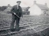 Back in the 1940s, the back-breaking hoeing of the turnip was made into a competition, alternating each year between The Poplars and Invercharron farms.