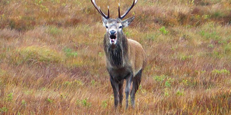 Autumn days This season offers some of the greatest wildlife spectacles - the Red Deer Rut-, as well as many opportunities to catch a glimpse of the elusive otters.