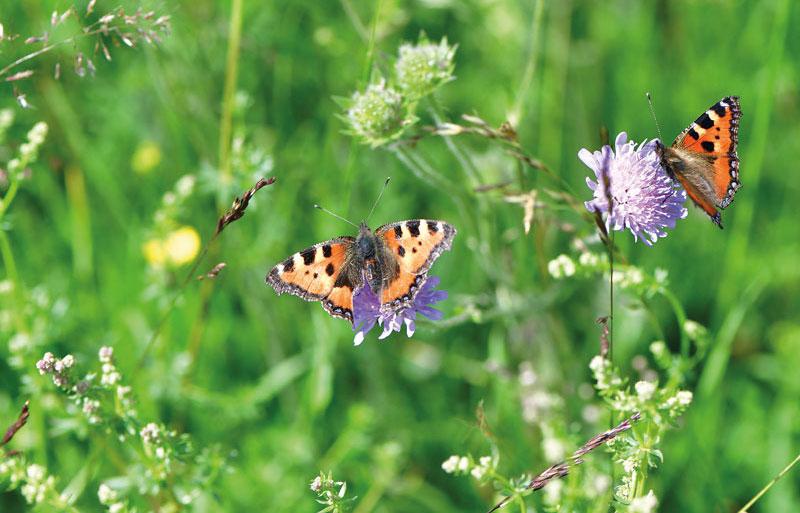 Tips for wildlife gardening