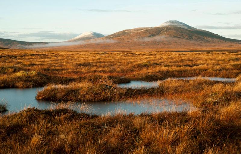 Greener Highland
